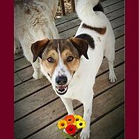 Adopt A Pet :: Simba - Warkworth, ON