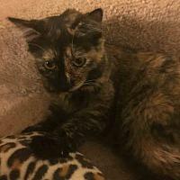 Adopt A Pet :: Judy Hopps - Gaithersburg, MD