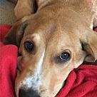 Adopt A Pet :: Mumford
