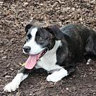Adopt A Pet :: 27312 - Zander