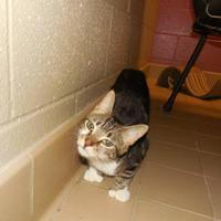 Adopt A Pet :: Lola - Jackson, MI