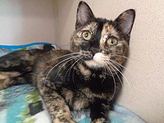 Adopt A Pet :: 18-0296  - Laramie, WY