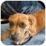 Photo 3 - Boxer Mix Dog for adoption in Homestead, Florida - Romey