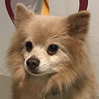 Adopt A Pet :: I1301102 - Pomona, CA