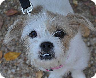 Border Terrier/Terrier (Unknown Type, Small) Mix Dog for adoption in Atlanta, Georgia - Bridget
