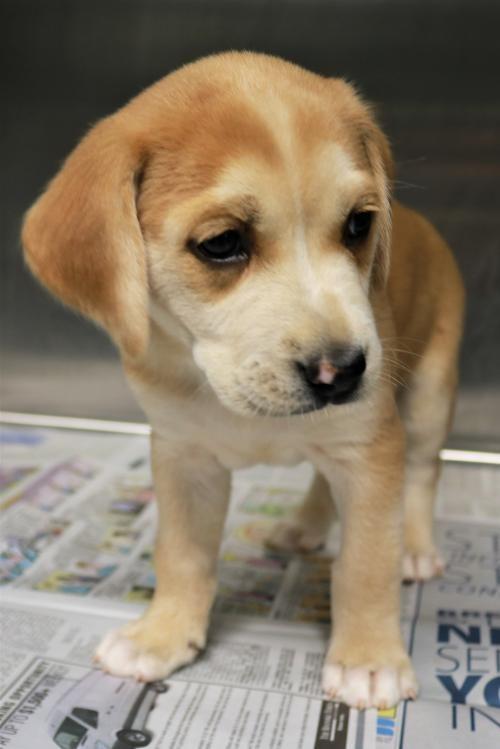 Puppy Ashley
