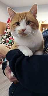 Adopt A Pet :: Jack Frost  - Moose Jaw, SK