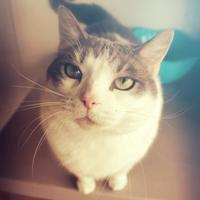 Adopt A Pet :: Phoebe - Winona, MN