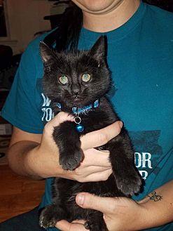 Petsmart Toms River Cat Adoption