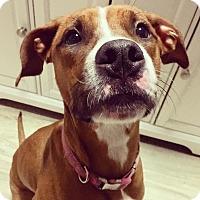 Adopt A Pet :: Fergie - Newtown, CT