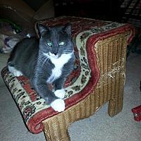 Adopt A Pet :: Captain Crash (COURTESY POST) - Baltimore, MD