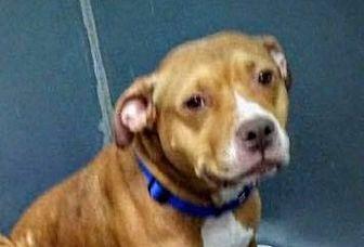 Adopt A Pet :: Laroux  - Anchorage, AK