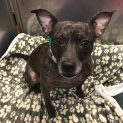 Puppies For Sale In Aberdeen South Dakota Adoptapetcom