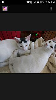 Adopt A Pet :: Patches and Hootie  - Ft Myers Beach, FL