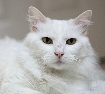 Katarina (Adoption Pending)