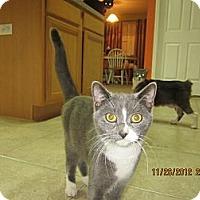 Adopt A Pet :: Gracie - Bunnell, FL