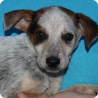 Adopt A Pet :: Judd - Starkville, MS