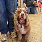 Adopt A Pet :: Larry (XPOST)