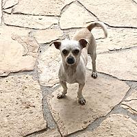 Adopt A Pet :: Felipe - San Diego, CA