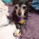 Adopt A Pet :: Pansy