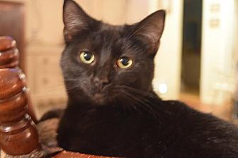 Adopt A Pet :: Buckwheat  - Bluefield, WV