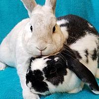 Adopt A Pet :: Bella & Barry - Los Angeles, CA