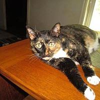 Adopt A Pet :: Winnioe - St. Louis, MO