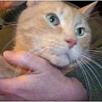 Adopt A Pet :: Sandy - East Stroudsburg, PA