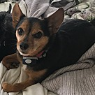 Adopt A Pet :: Picasso