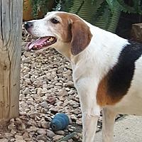 Adopt A Pet :: Heidi - Byhalia, MS