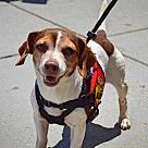 Adopt A Pet :: Pandora