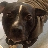 Adopt A Pet :: Elliot - Germantown, MD