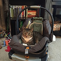 Adopt A Pet :: Omni (COURTESY POST) - Baltimore, MD