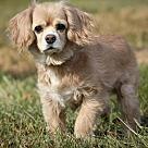 Adopt A Pet :: Myra