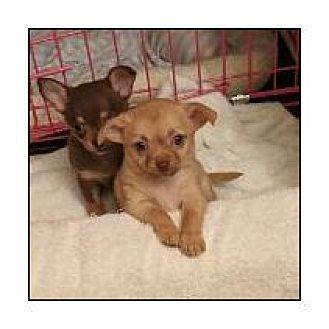 Adopt A Pet :: Celeste & Celine  - Virginia Beach, VA