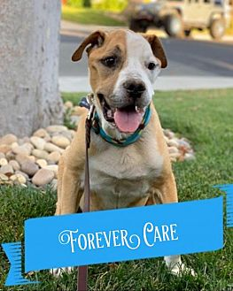 Adopt A Pet :: Archie  - Santa Clara, CA