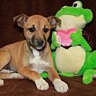 Adopt A Pet :: Medium Shake