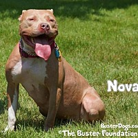 Adopt A Pet :: Nova (FOSTER NEEDED) - Belleville, MI