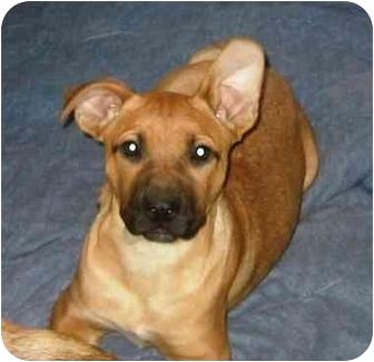 Providence Ri German Shepherd Dog Meet Asia A Pet For