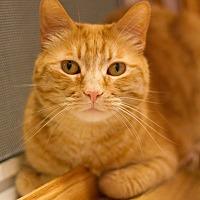 Adopt A Pet :: Geisha - Grayslake, IL