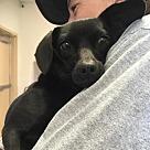 Adopt A Pet :: Zalima