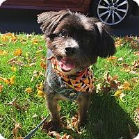 Adopt A Pet :: Digby - Newtown, CT