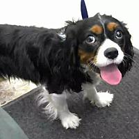 Adopt A Pet :: URGENT on 07/25 BIG BEAR - San Bernardino, CA