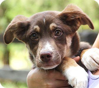 Husky/German Shepherd Dog Mix Puppy for adoption in Minnetonka, Minnesota - Mason