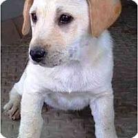 Adopt A Pet :: Chanel - Houston, TX