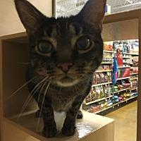 Adopt A Pet :: Einey - Chicago Heights, IL
