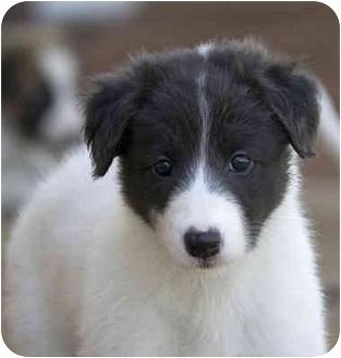 Animal Services | Santa Rosa County, FL