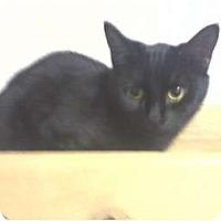 Adopt A Pet :: Taylor - West Plains, MO
