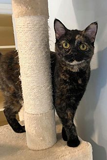 Adopt A Pet :: BOO  - Northwood, NH