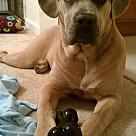 Adopt A Pet :: Keli (COURTESY POST)